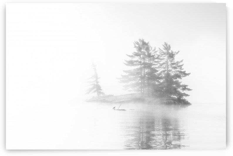 Bird island by Marko Radovanovic