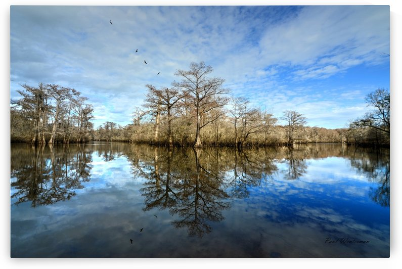32- Cypress Reflection by Paul Winterman