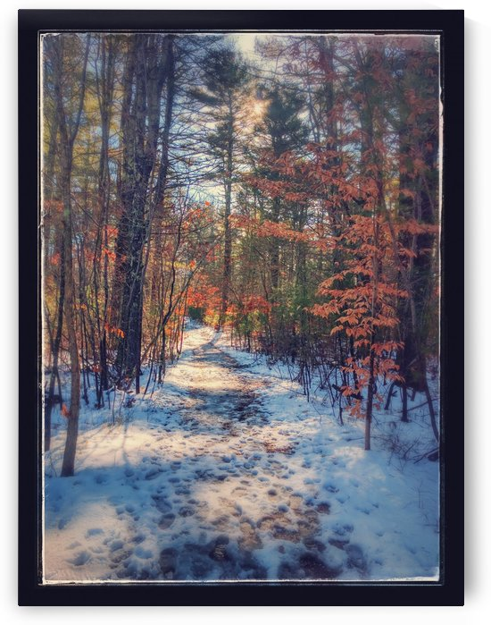 Pathway of winter warmth by Gilbert Rod