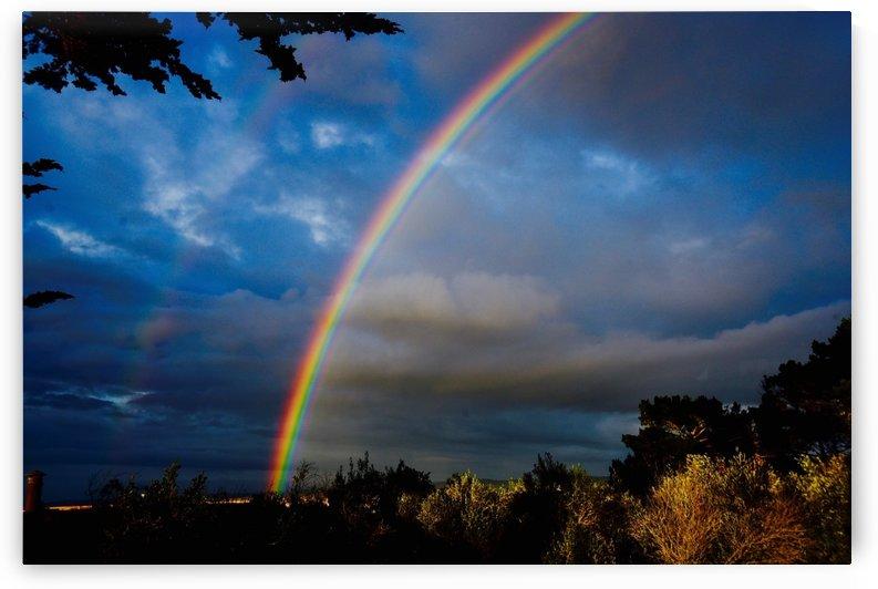 Rainbow in Monterey  by Robin Buckley