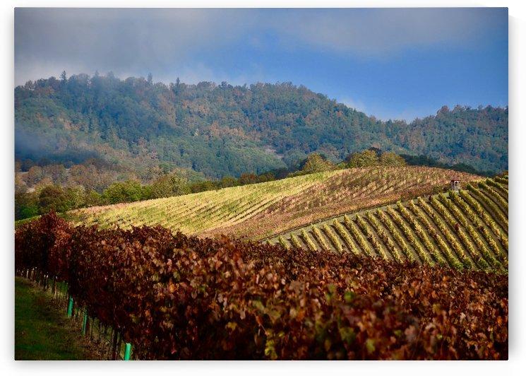 Abacela Winery by Robin Buckley