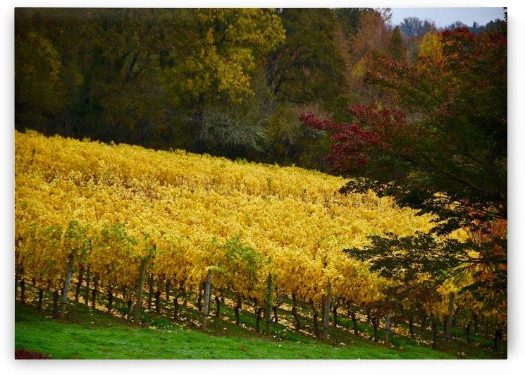 Golden Vines by Robin Buckley