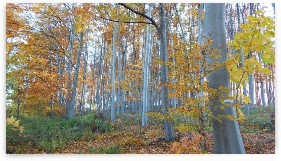 Golden Trees by Ann Romanenko