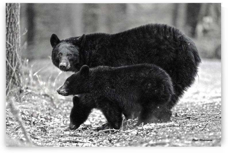 207-Bear Bottoms by Paul Winterman