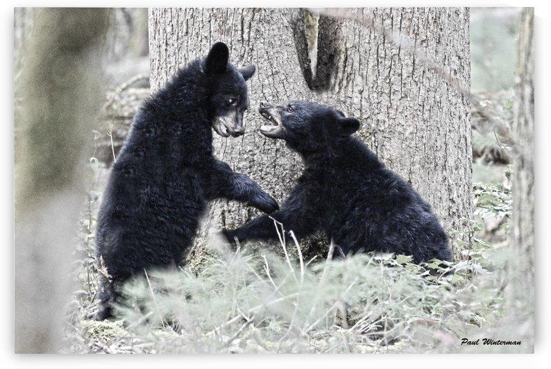 57-Cub Bear Fight by Paul Winterman