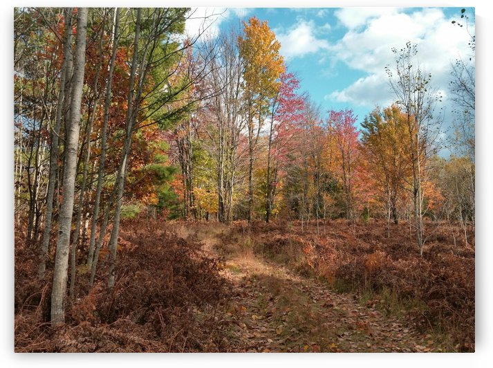 Autumn Trail by William Parlin