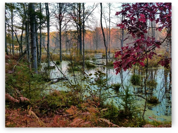 Quiet Wetland by William Parlin