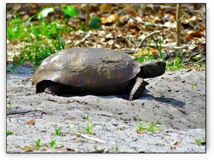 tortoise 1 by Eduardo Bravo