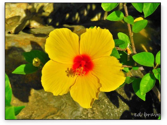 yellow & red by Ed Bravo