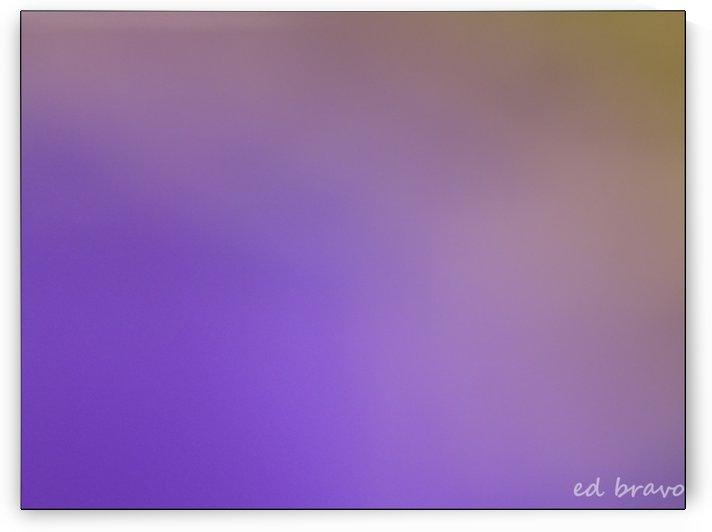 original lilac  by Ed Bravo