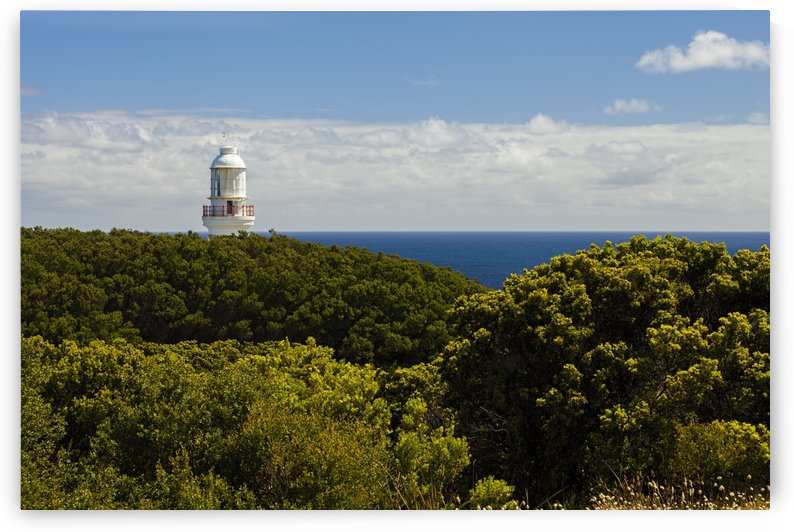 Cape Otway Lighthouse above Bushes 011142639 by Maxwell Jordan