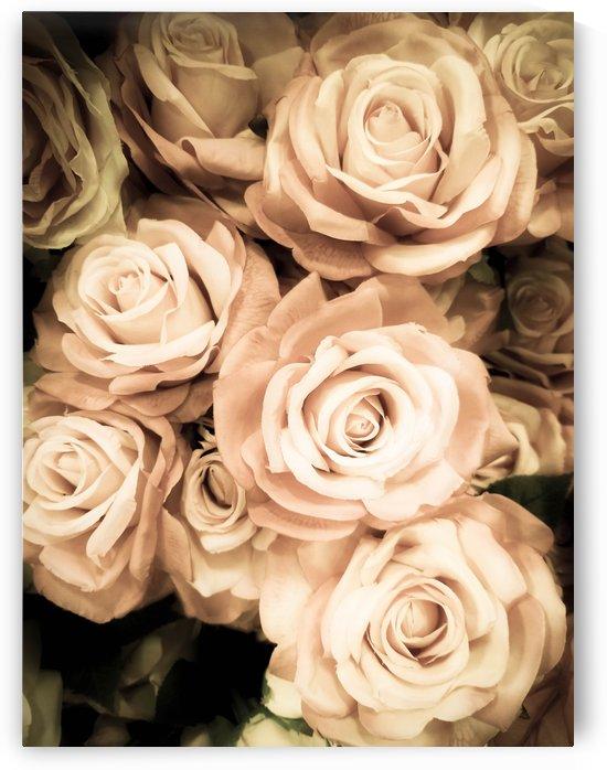 Vintage Roses by Yuliya Marusina
