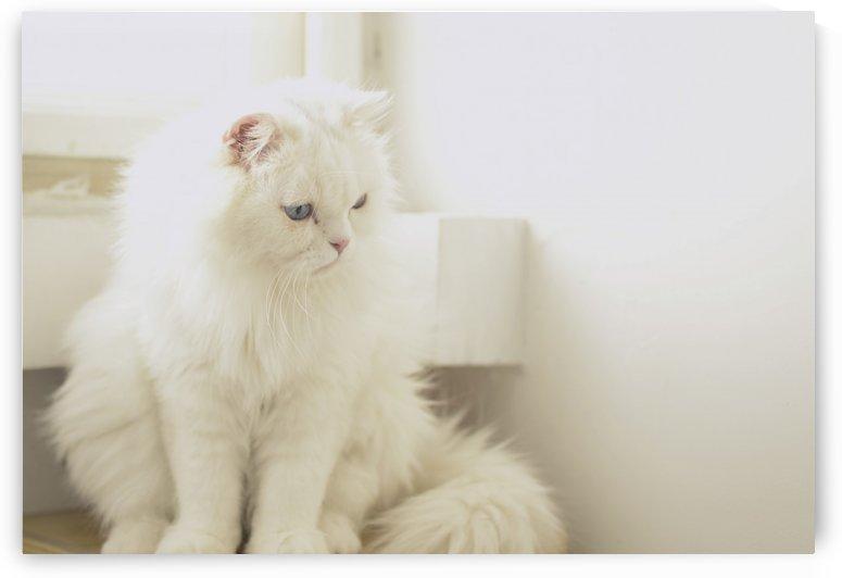 cat in sunlight by MENG LU