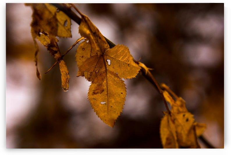 Fall Hibernation by Megan Hileman