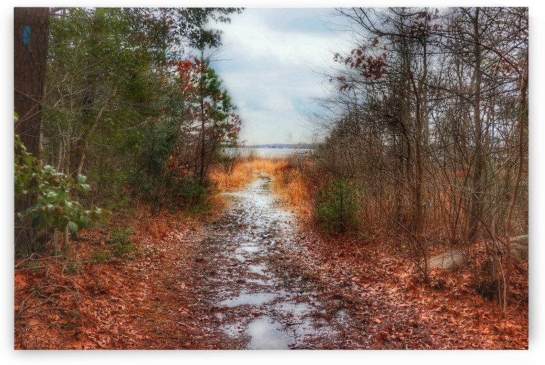 muddy trails to the beach by Gilbert Rod