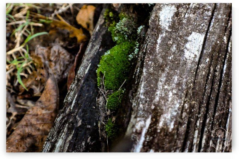 Still Moss by Amber Handy