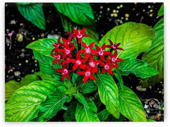Beauty in the Flower by Amber Handy
