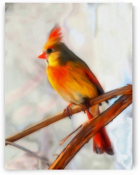 Cardinal by Illuminary Artworks