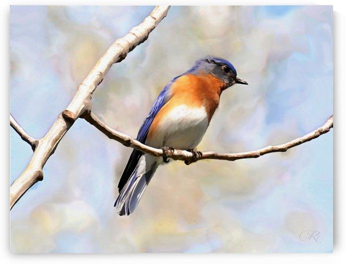 Blue Bird by Illuminary Artworks
