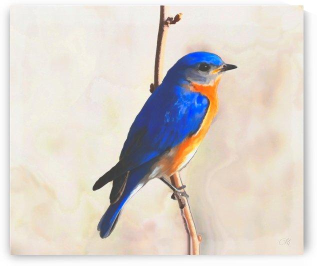 Eastern Bluebird by Richard D. Jungst