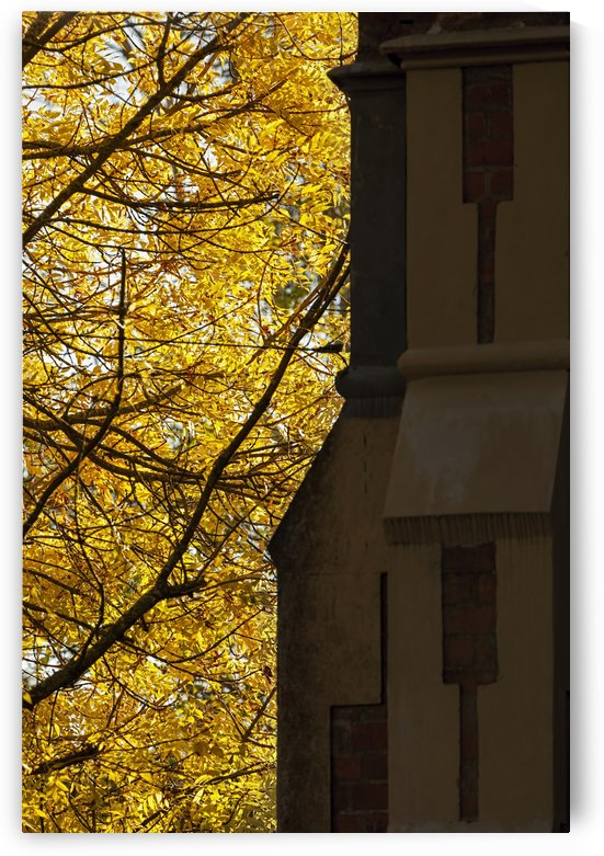 Autumn Tree beside Old Church A011201_1406751 by Maxwell Jordan