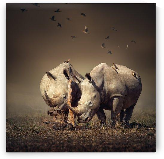 Two Rhinoceros with birds by Johan Swanepoel