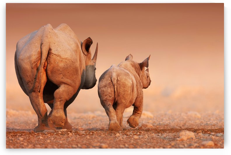 Black Rhinoceros calf and cow walking away by Johan Swanepoel