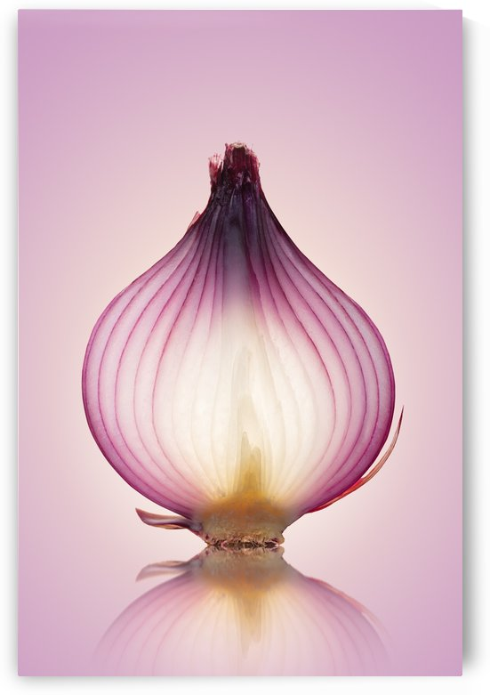 Red Onion Translucent layers by Johan Swanepoel