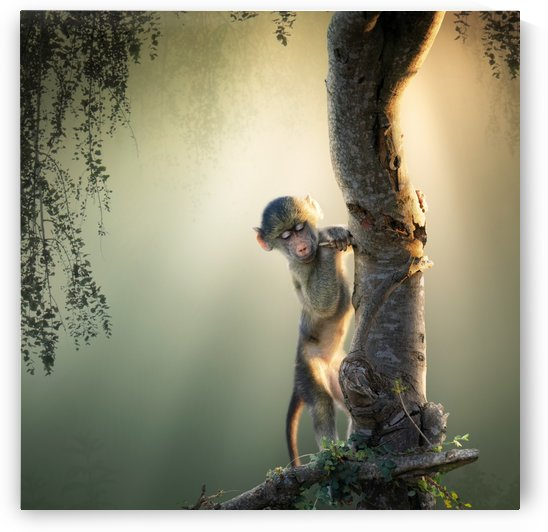 Baby Baboon in tree by Johan Swanepoel