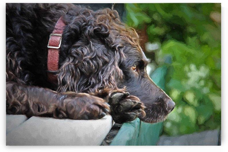 Repos du chien by dbriyul