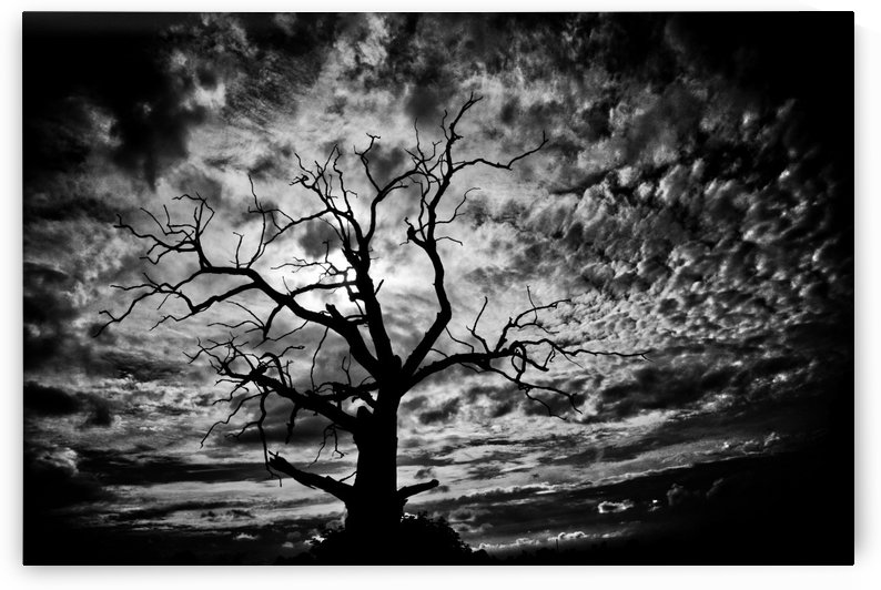 Spooky tree by Andy Jamieson