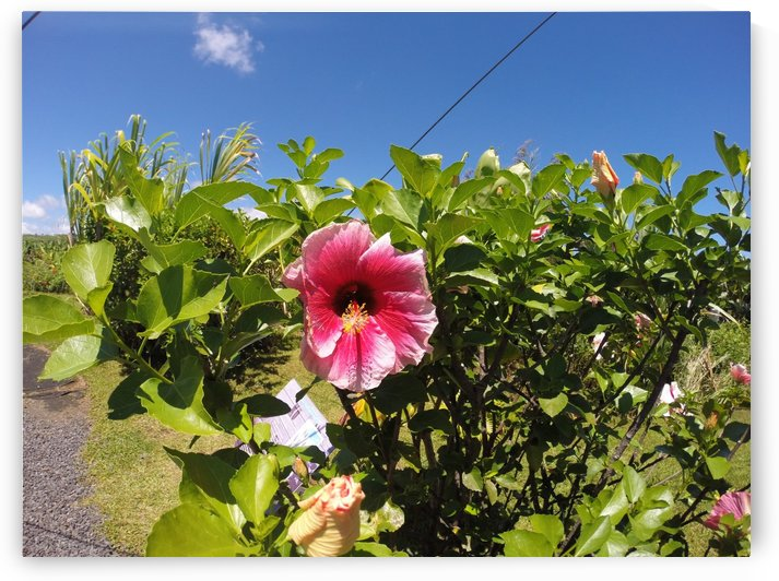 Hawaii Breeze by Raeann Vossberg