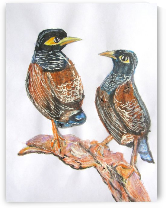 Indian Myna by Sarah Flanagan