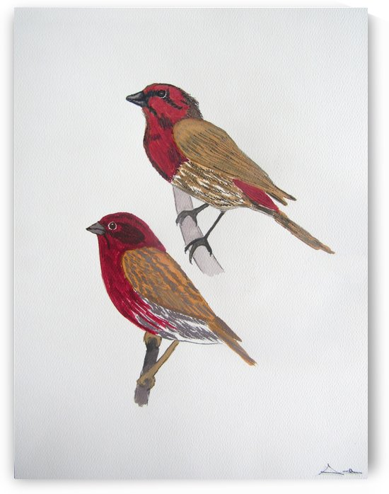 House Finch and Purple Finch by Sarah Flanagan