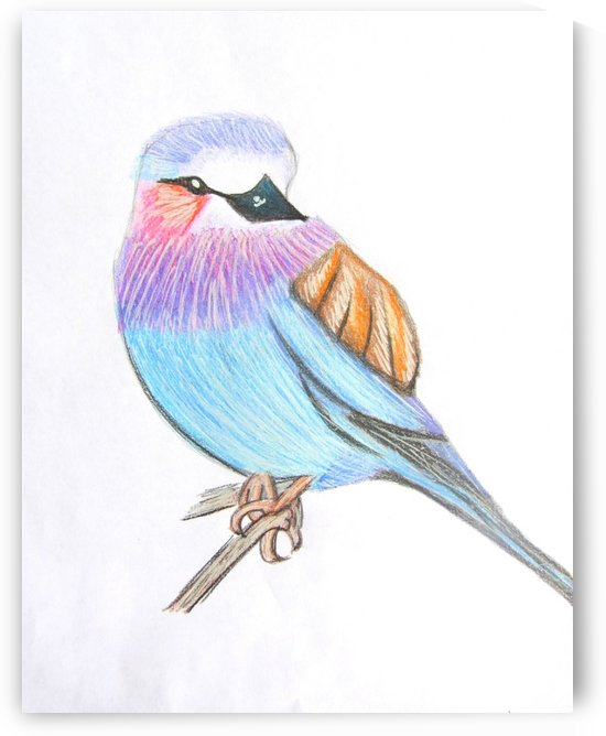 Lilac Breasted Roller by Sarah Flanagan