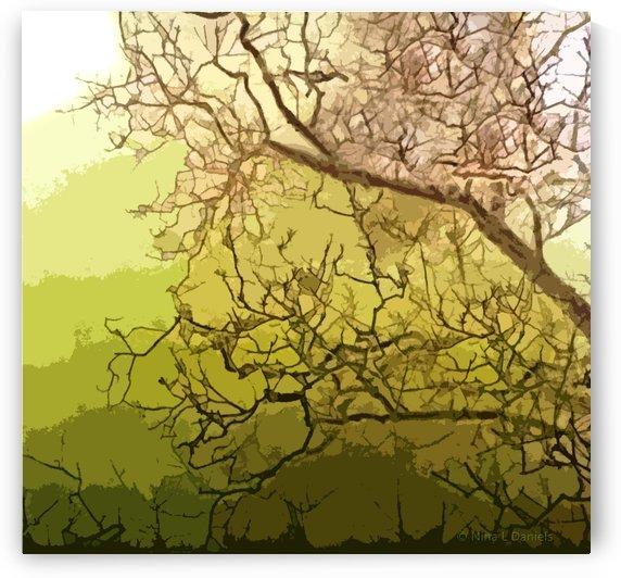 TreeBranches1 by Nina
