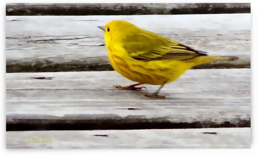 Yellow Bird Painted by Nina