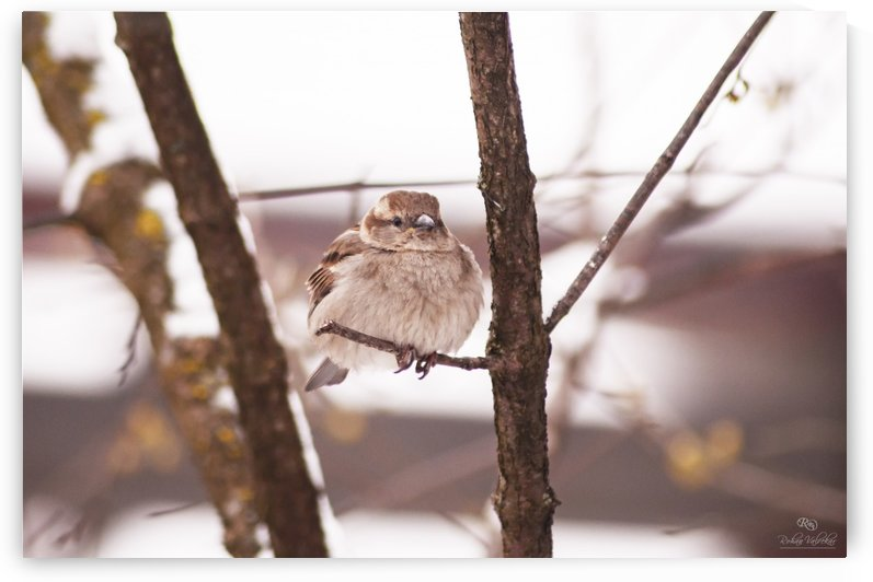 Spring Chirps by Rohan Valvekar