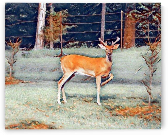 Hello Deer by Nina