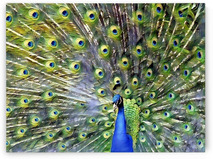 Peacock Bloom by Nina