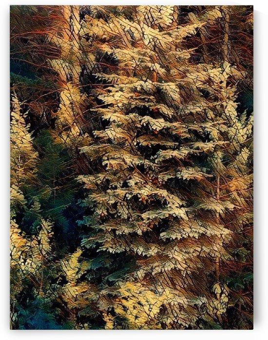 Colorado Spruce by Nina