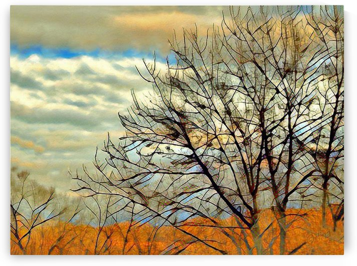Branches by Nina