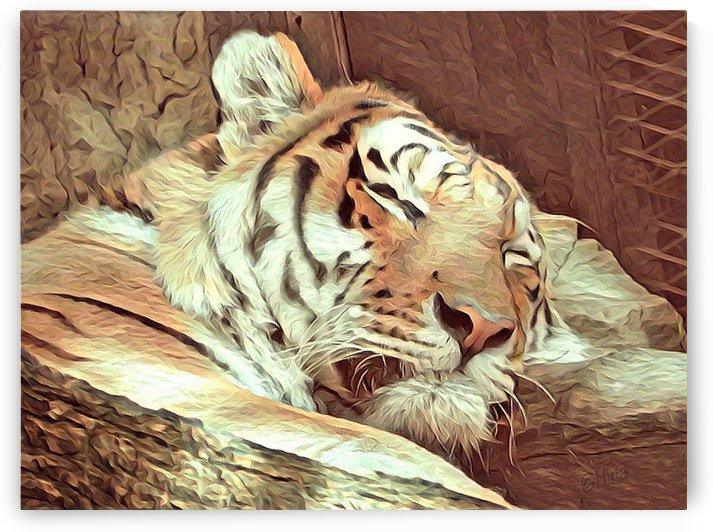 Sleepy Beast by Nina