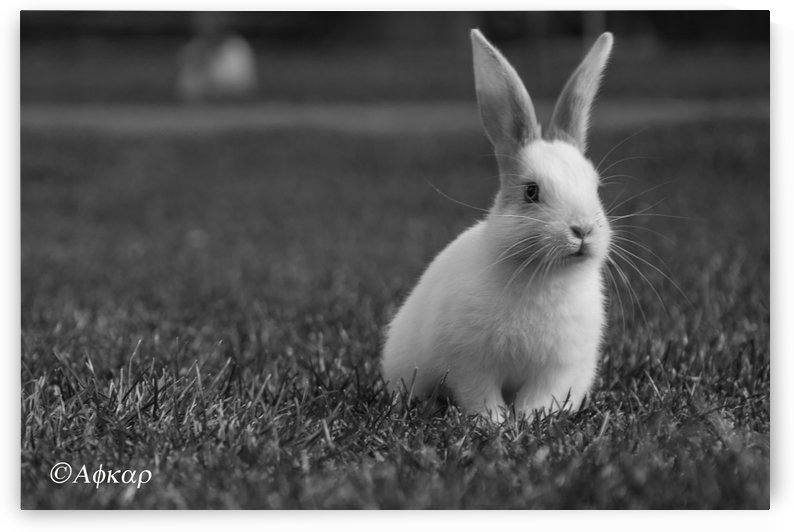 Lovely Rabbit by ali eftekhar