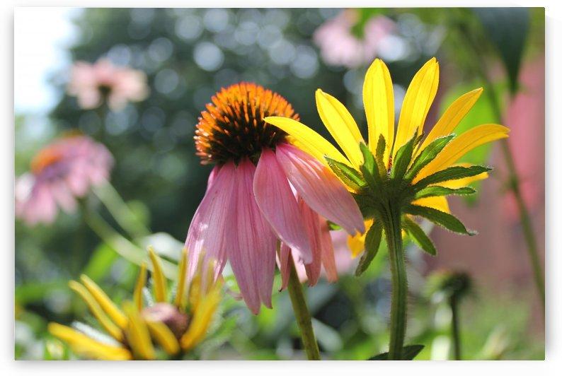 Floral Winston Salem by Raeann Vossberg