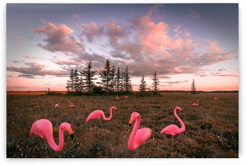 Flamants roses by Rene Beaulieu