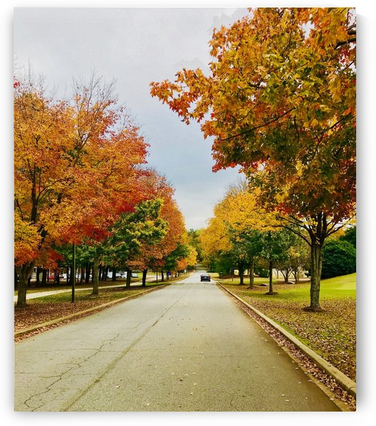 Fall at Furman by LC Prints