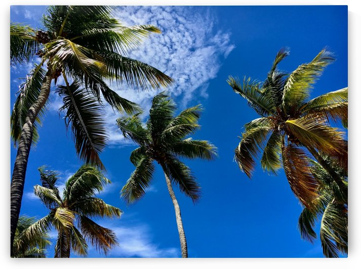 Palm Tree Delight by LC Prints