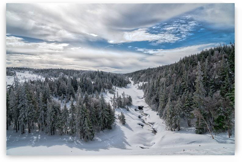 A Boreal Winter by Michel Soucy
