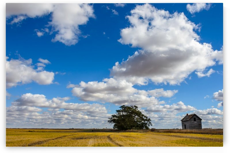 lush, white cumulus clouds against the blue sky over a yellow beveled field with a green tree by Viktor Birkus